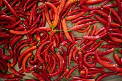 Peppers from St. Francis Farm before they are dried